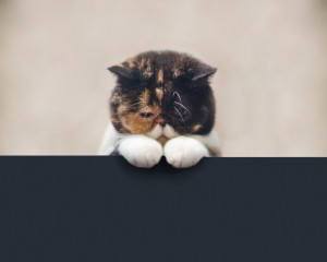 кот грусть